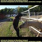thumb_kseniia86pronchenko_281929.jpeg