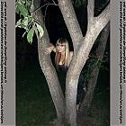 thumb_princesa_darya_283729.jpg